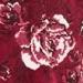 burgundy print